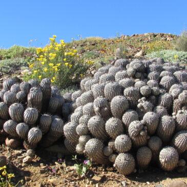 Desierto Florido y Parque Nacional Llanos de Challe