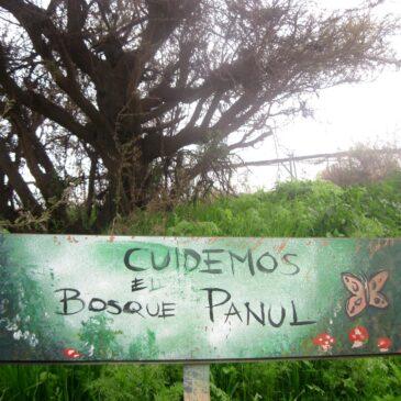 Trekking Abierto Bosque Panul
